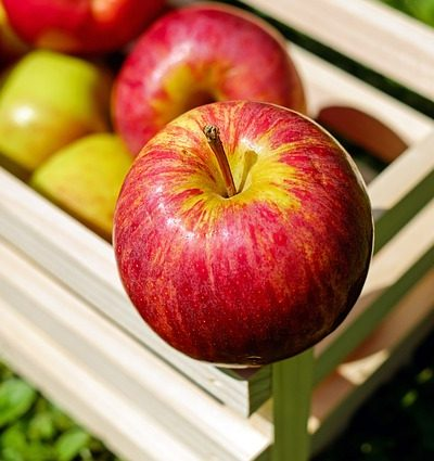 שמירה על פירות הקיץ בסביבת המגורים הביתית
