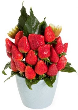 זר פירות אדום